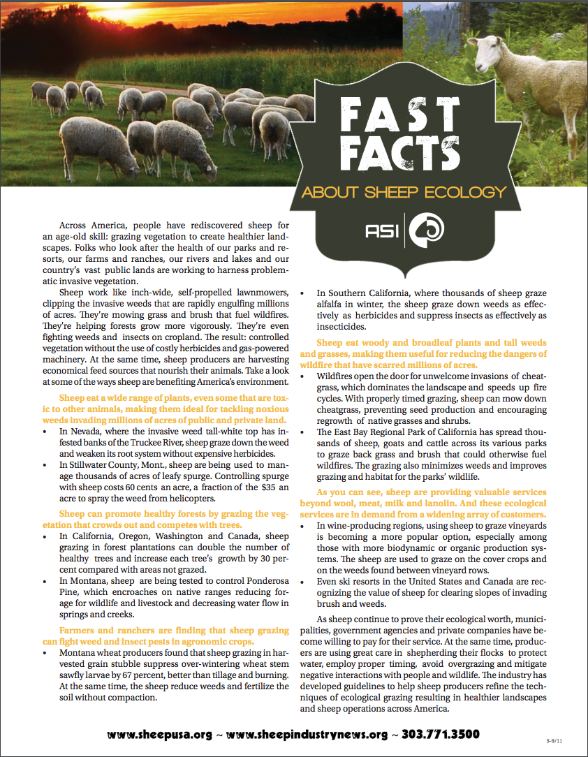 About Sheep Ecology